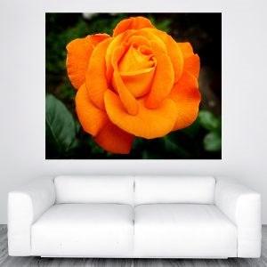 Narancssárga rózsa falikép M415