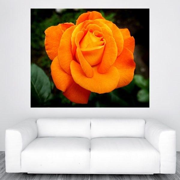 Naracssárga rózsa szép óriás poszters olcsó fali kép nyomtatás plakát
