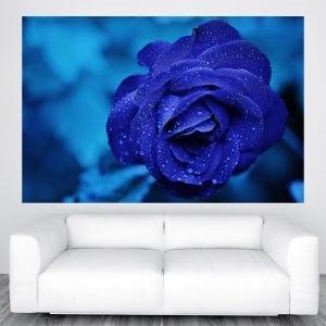 Kék rózsa falikép M414