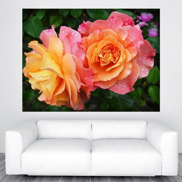 Rózsa virág szép óriás poszter olcsó fali kép nyomtatás plakát
